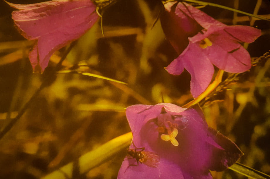 le piante con fiori