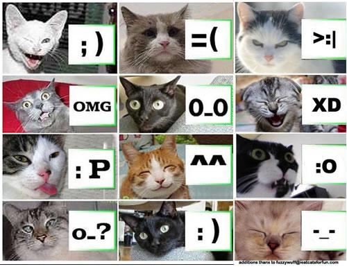 lolcat-emoticon