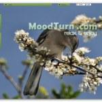 MoodTurn, sonido e imágenes para relajarse