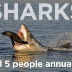 Los tiburones no son tan malos como crees