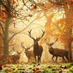 Animales iluminados por la luz del Sol [Galería]