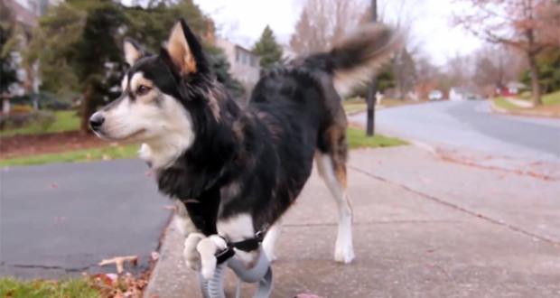 perro con protesis 3d
