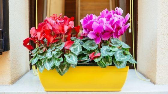 plantas que resisten al frío