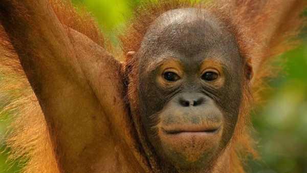 """Oggi i n Tv: La """"Wild School"""" di Rai5 (canale 23) - La classe delle scimmie"""