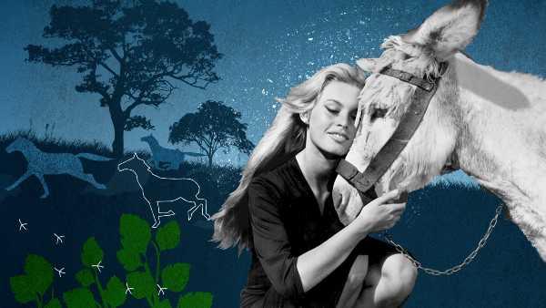 """Sky Arte - stasera """"Brigitte Bardot, Eterna Ribelle"""" - La donna che ha incarnato lo spirito degli anni '70 racconta la sua più grande ribellione"""