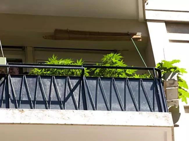 Photo Essay — Weed growing on window sills in Geneva