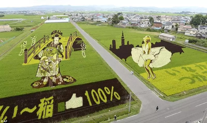 Rice paddy art — nice collection of photos and links