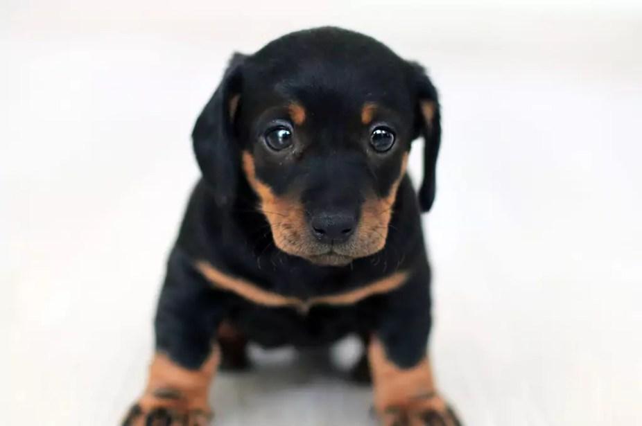 Intl Puppy Day 2019
