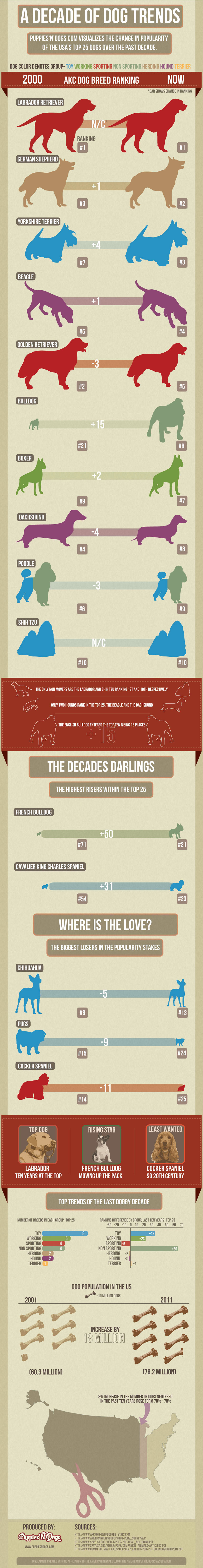 Most Popular Dog Breeds - Top 10 [ Infographic ]