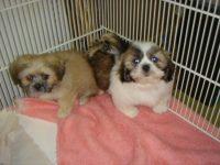 Puppie for heart 028.jpg