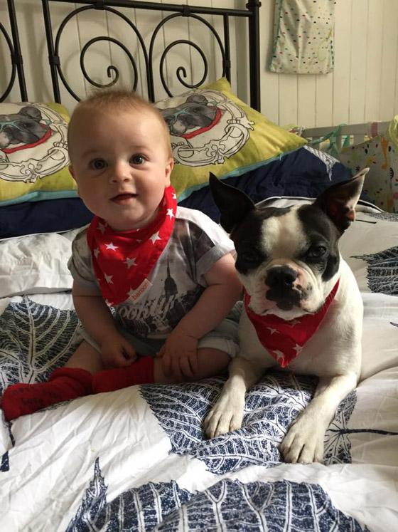 Dexter Puppy Bandana