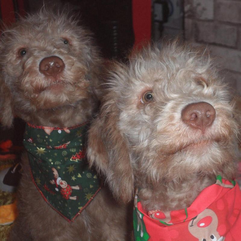 Puppy Bandana Gallery Puppy Bandana
