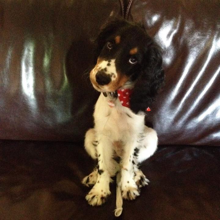 Red Spotty Dog Bandanas Polka Dot Dog Bandanas For Sale