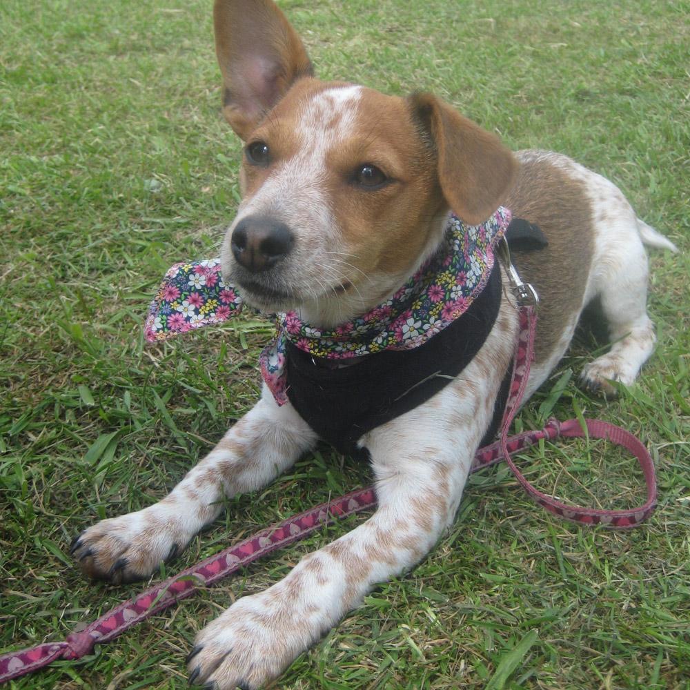 Dog Bandana Photos At Stoke Parish Fete