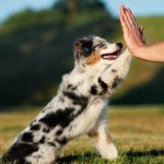 7 Popular Medium Sized Dog Breeds Puppy Buddy