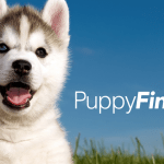 Puppyfind Puppies For Sale