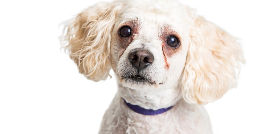 How to clean & reduce tear stain visibility on your dog