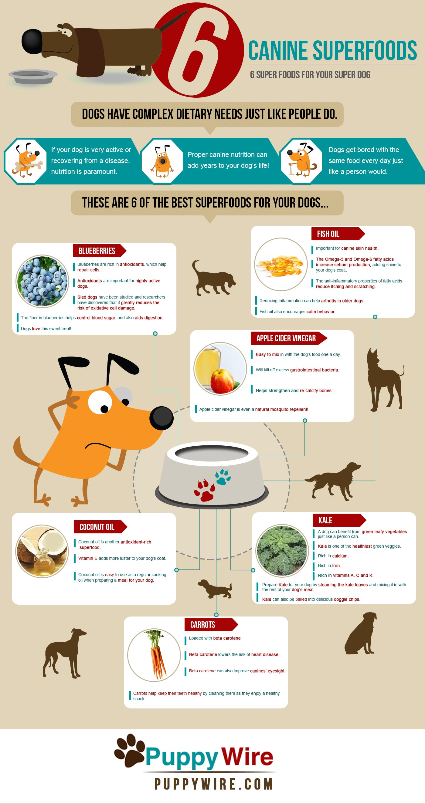 Superfoods For Dogs Top 6 For Your Super Dog