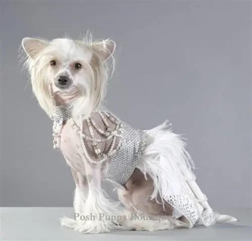 couture futuristic royal harness dress - Você daria este colar para seu Pet?