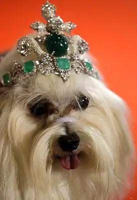 dog tiara - Você daria este colar para seu Pet?