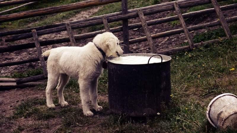 feed-a-puppy