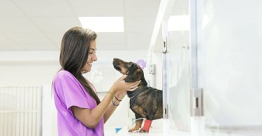 Veterinary Assistant Certification Benefits