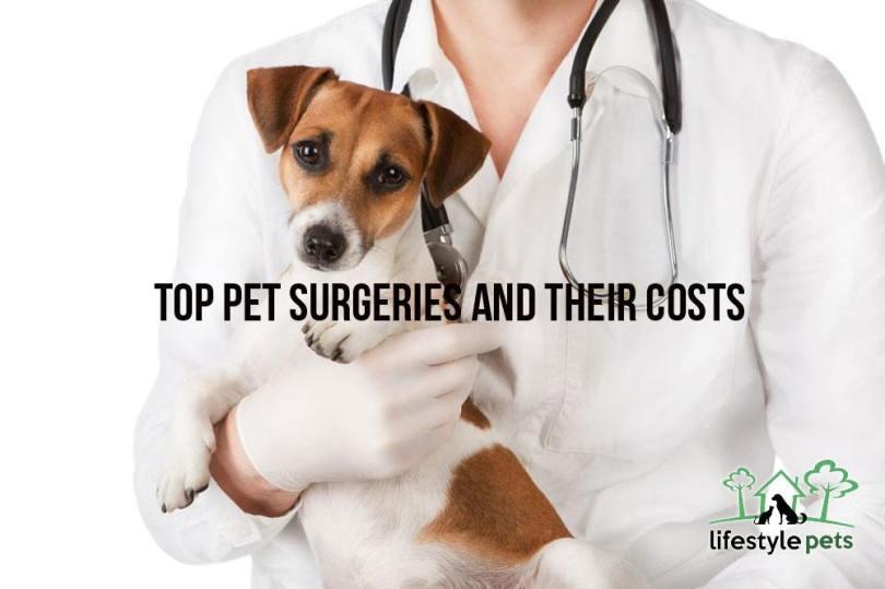 petsurgery1