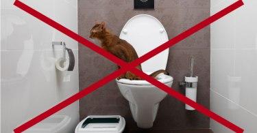 No Toilet Training FI