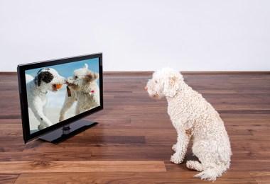 Videos Fo Pets FI