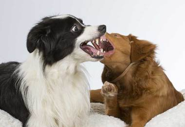 dog dog aggression in home
