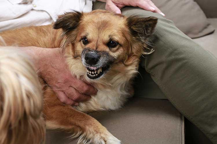 Protective Dog Behavior