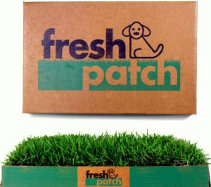 Fresh patch product image of large fake grass area for dogs