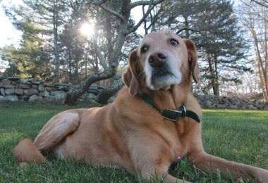 why adopt a senior dog