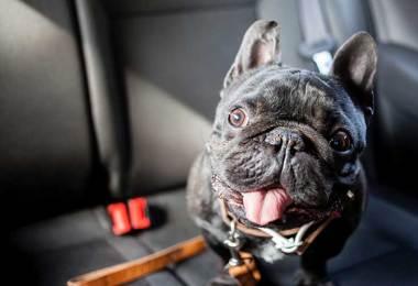 dog hates car rides