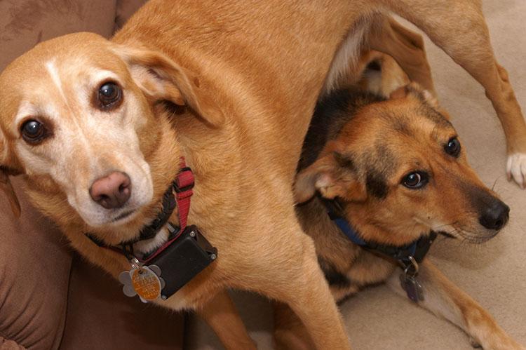 Dog Shock Collars