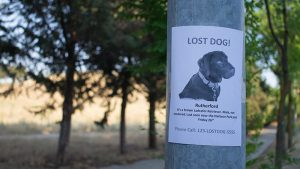 Blog lost dog 300x169