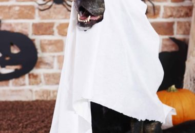 DIY Dog Halloween Costumes 683x1024