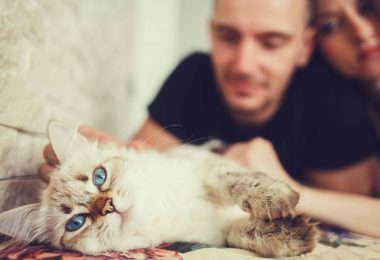 select a cat 1024x683