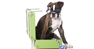 Finding a Boarding Facility or Pet Sitter
