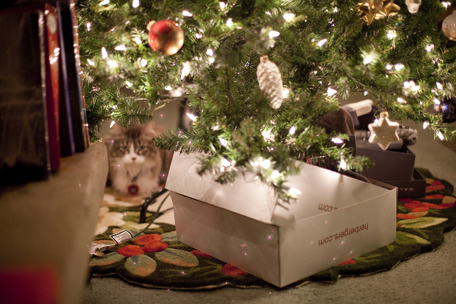 Poofus the Maine Coon hiding underneath the Christmas tree.