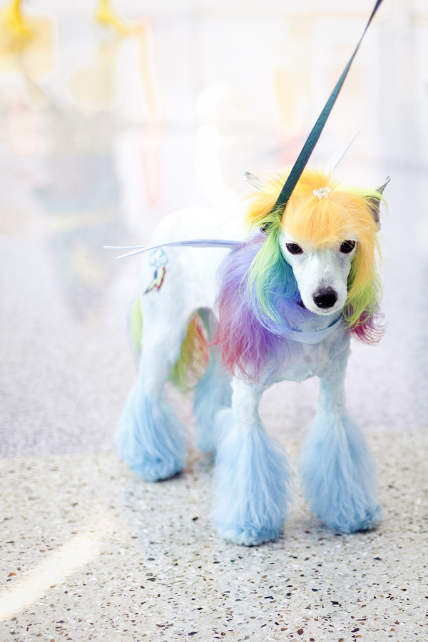 My Little Pony cosplay from a dog at Wondercon 2013.