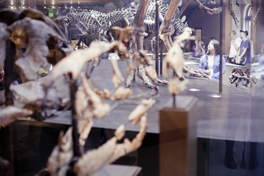 Ela in the midst of all the dinosaur fossils on display at the Natural History Museum in Los Angeles.