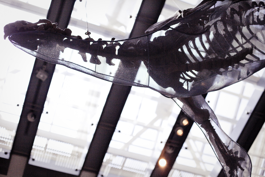 Fossil suspended on the ceiling at the Natural History Museum in Los Angeles.