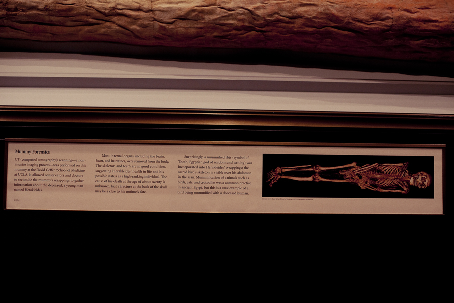 Xray of sarcophagus on display at the Getty Villa.