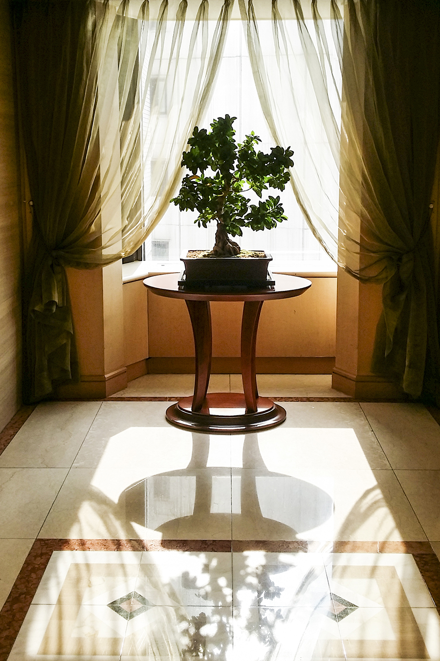 Morning light through a potted plant at the Lotte Hotel, Myeongdong, Korea