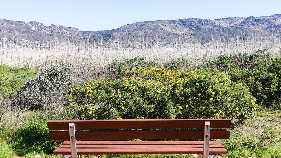 Wooden bench overlooking a scenic landscape at the Silvermine Wetland Conservation Area, Fish Hoek, Cape Town, South Africa.