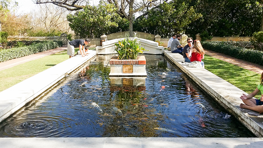 Pond feature with koi fish outside wine tasting at Fairview Wine and Cheese, South Africa.