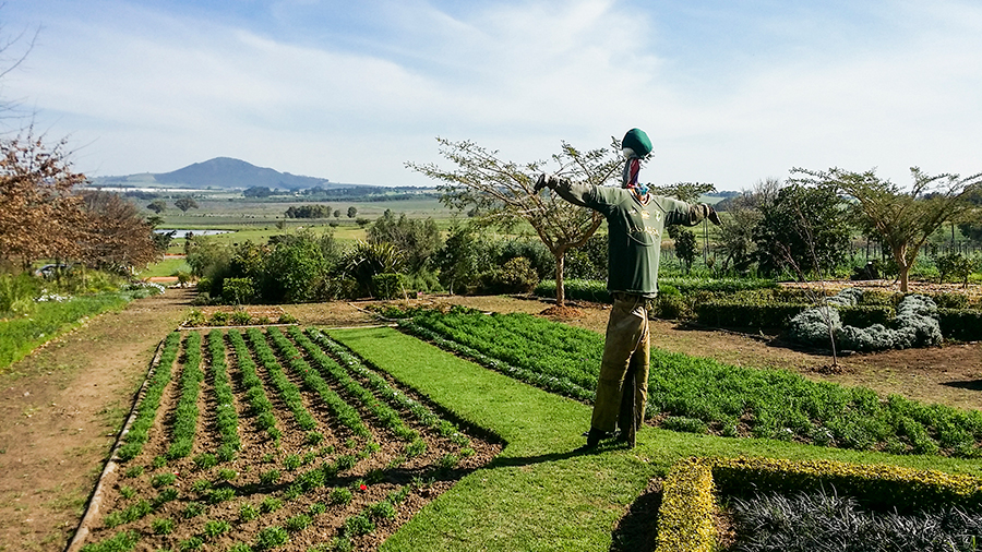 Scarecrow in a garden at Fairview Wine and Cheese, South Africa.