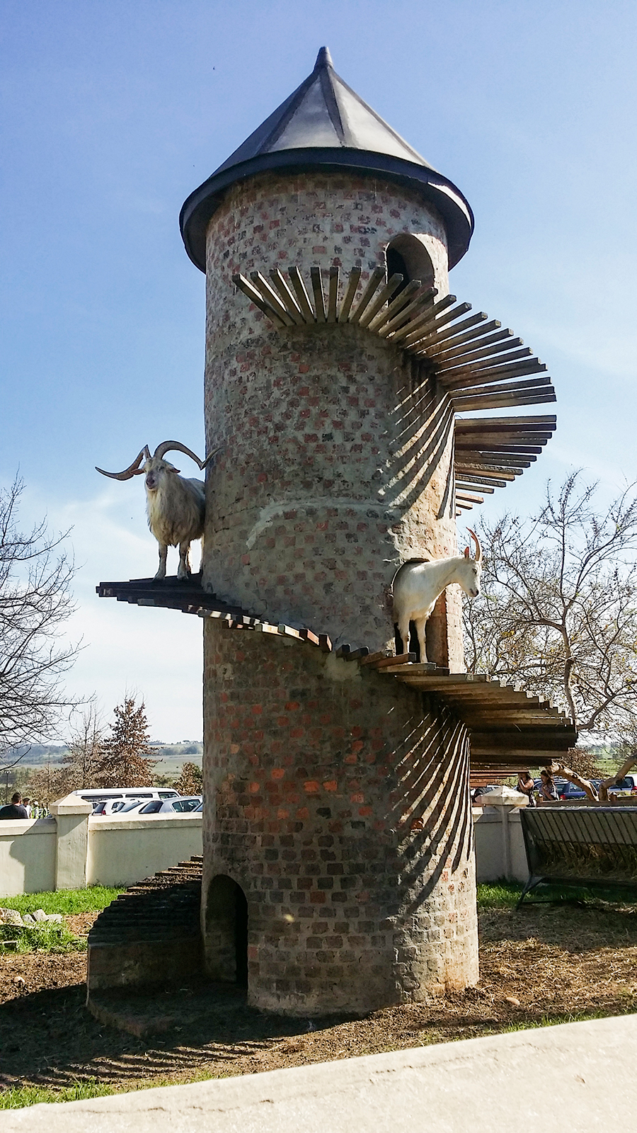 Goats emerging from the Goat Tower at the Fairview Wine and Cheese, South Africa.