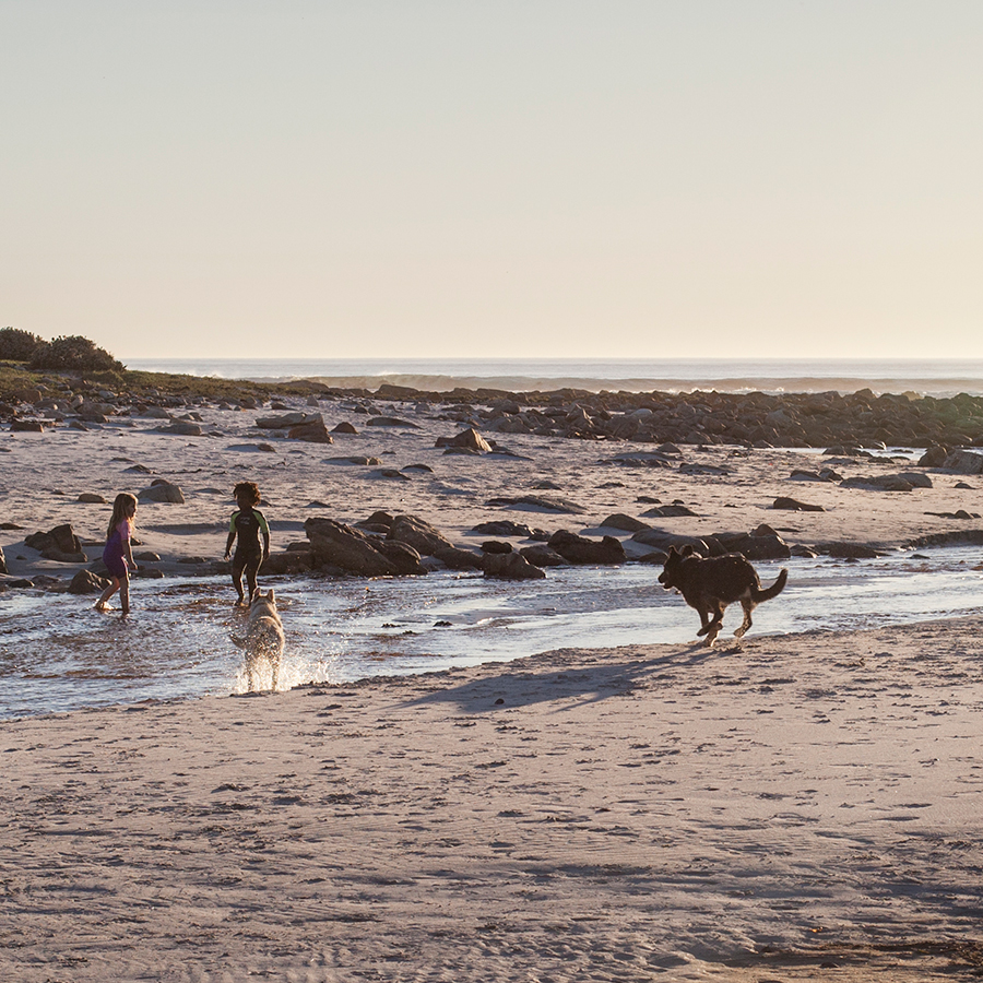 Children and dogs playing on the beach at Rocky Shores, Hout Bay, Cape Town, South Africa.